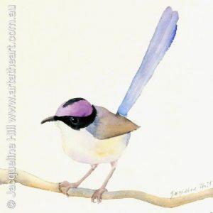 Watercolour Fairy Wren
