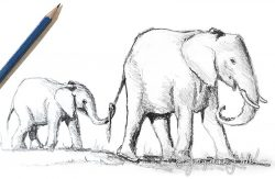 """Road Train (elephants)"" by Jacqueline Hill"